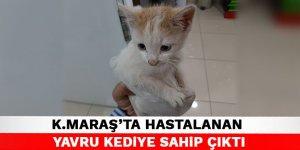 Kahramanmaraş'ta hastalanan yavru kediye sahip çıktı