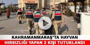 Kahramanmaraş'ta hayvan hırsızlığı yapan 2 kişi tutuklandı