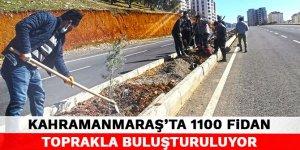Kahramanmaraş'ta 1100 fidan toprakla buluşturuluyor