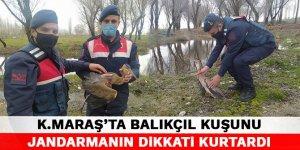 Kahramanmaraş'ta Balıkçıl Kuşunu jandarmanın dikkati kurtardı