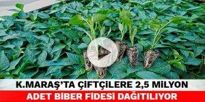 Kahramanmaraş'ta çiftçilere 2,5 milyon adet biber fidesi dağıtılıyor