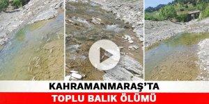 Kahramanmaraş'ta toplu balık ölümü