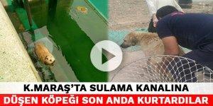 Kahramanmaraş'ta sulama kanalına düşen köpeği son anda kurtardılar