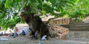 Anıt Ağacın yeni meydanı tamamlanıyor