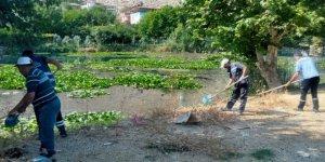 Kahramanmaraş'ta Nilüfer çiçekleri atıklardan kurtarıldı