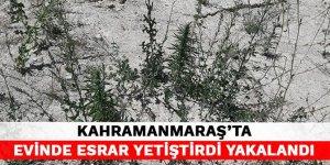 Kahramanmaraş'ta evinde esrar yetiştirdi yakalandı