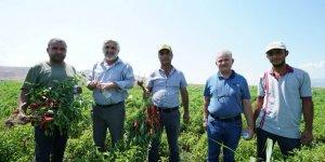 Kahramanmaraş'ta çiftçi fide desteğinden memnun