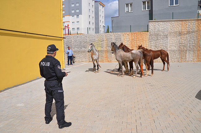 firari-atlar-trafigi-birbirine-katti1.jpg