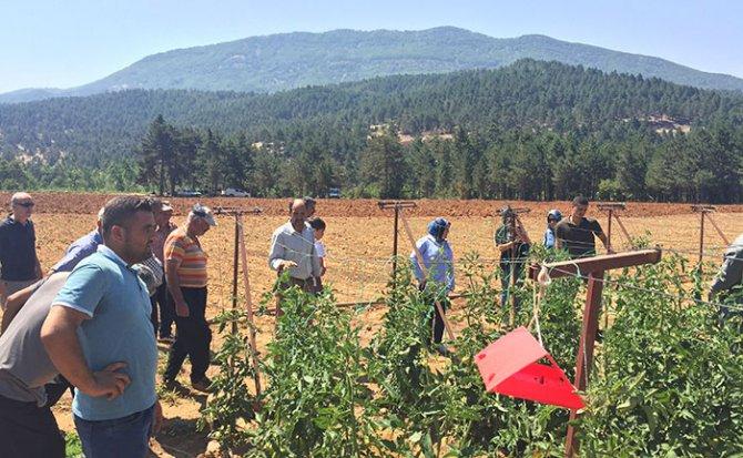turkoglu'nda-sirik-domates-yetistiriciligi-gelisiyor1.jpg