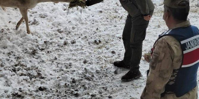 Kahramanmaraş'ta jandarma geyikleri eliyle besledi