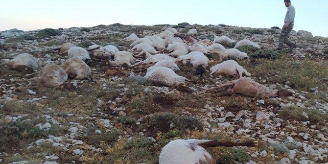 Kahramanmaraş'ta yıldırım düştü 82 koyun telef oldu